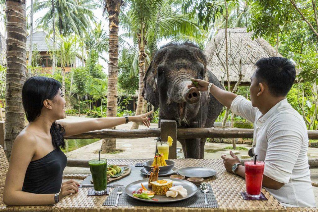 Kebun Binatang Elephant Park