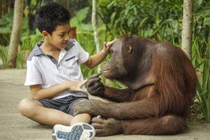 Lombok Elephant Park 2