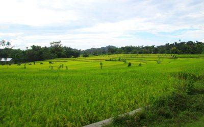 Desa Mareje Lombok Barat