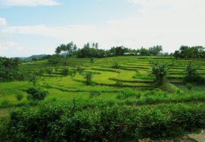 Desa Mareje